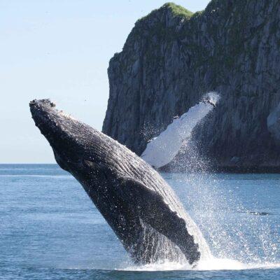 3.5 Hour Kenai Fjords Wildlife Cruise