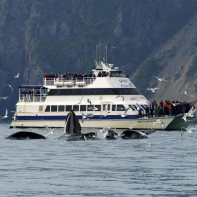 6 Hour Kenai Fjords National Park Cruise
