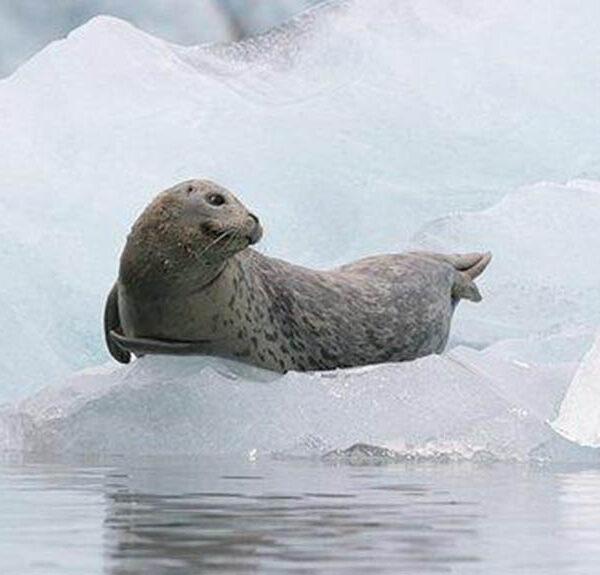 rusts-glacier-wildlife-tour-2
