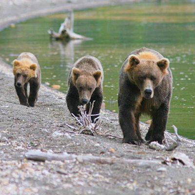 rusts-lake-clark-national-park-tour-2