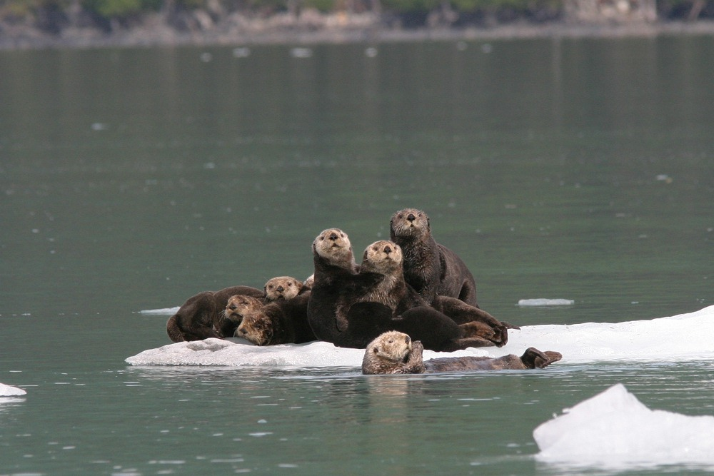 img_4812_seaotters